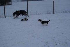 pue_antsunny_beagle1